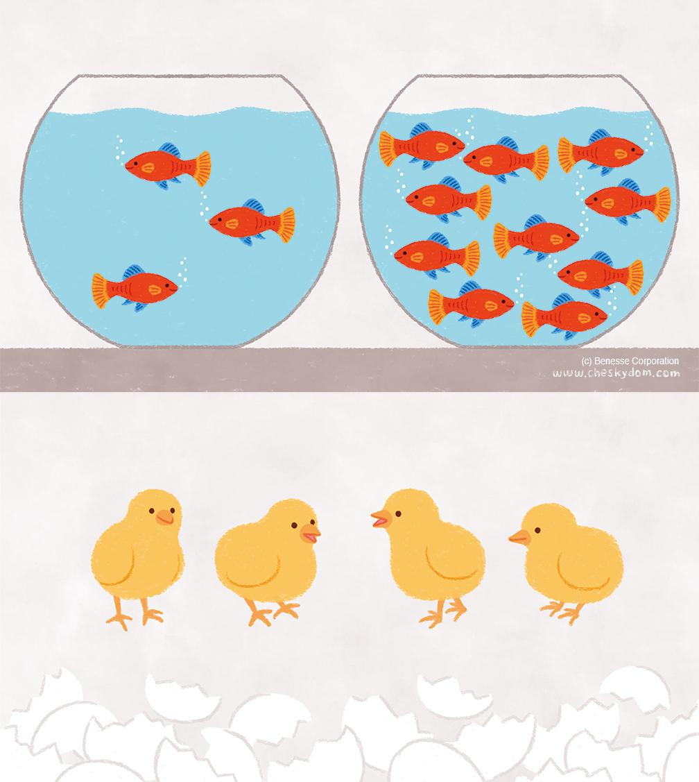 熱帯魚、ひよこのイラスト