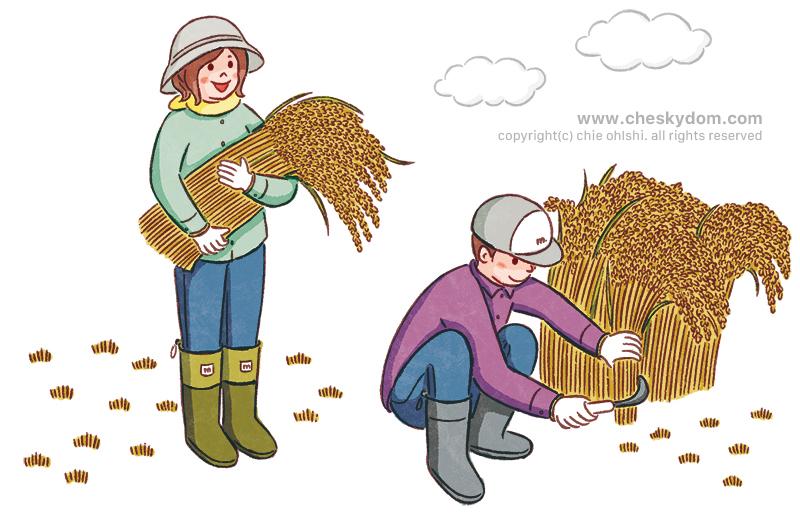 稲刈りをしているイラスト